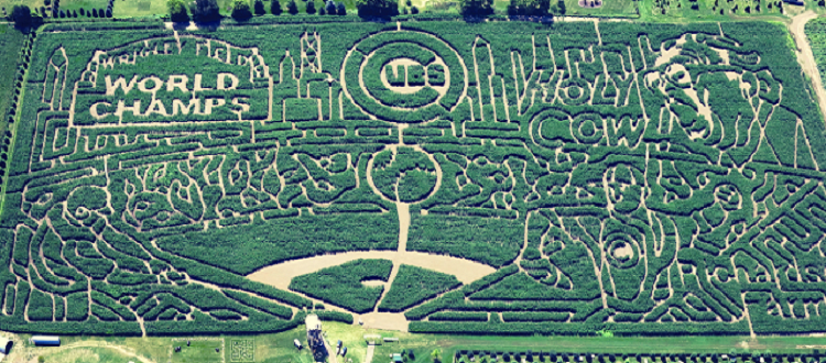 chicago cubs corn maze