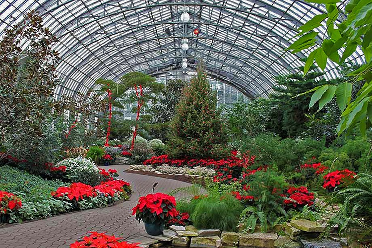 Garfield conservatory fire & ice