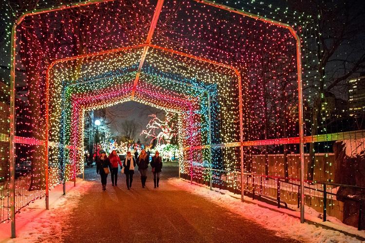 zoolights chicago