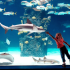 Reminder:  Free Days in 2018 at the Shedd Aquarium in Chicago