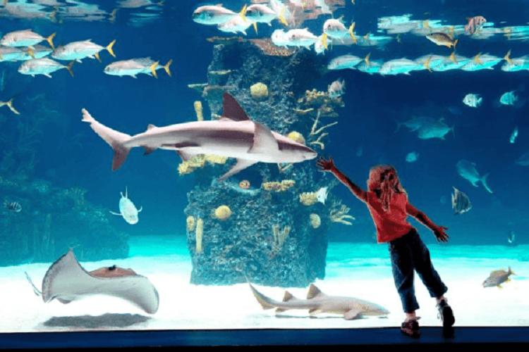 free days shedd aquarium chicago
