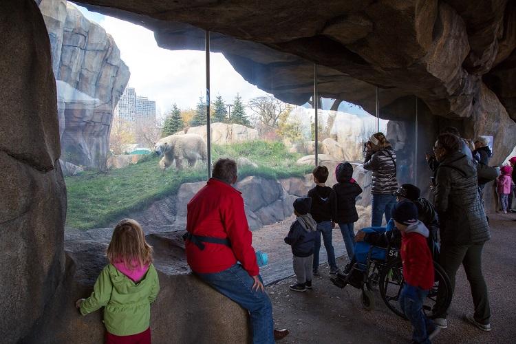 free lincoln park zoo polar bear exhibit