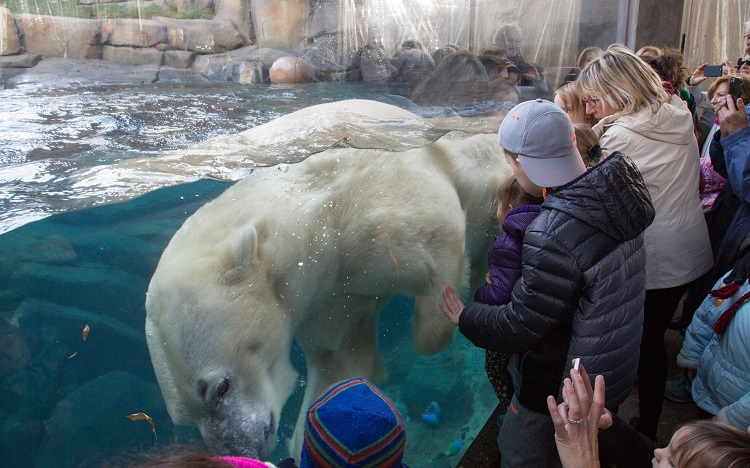 free lincoln park zoo polar bear fun