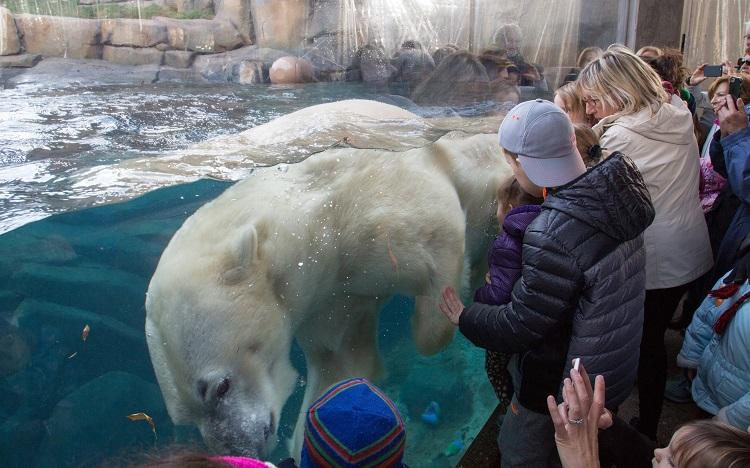 free lincoln park zoo polar bear fun