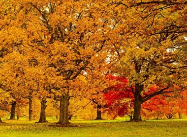 free admission thanksgiving morton arboreteum 2018 -750 x 500
