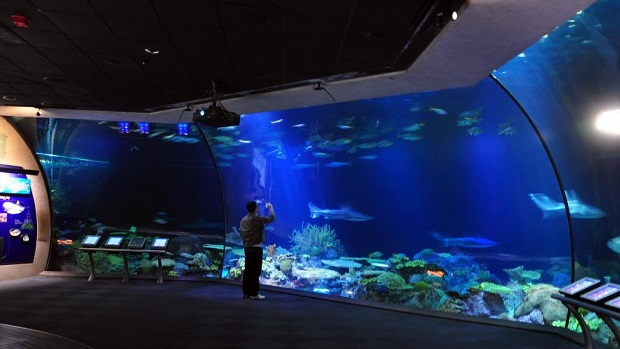 free days at shedd aquarium in chicago