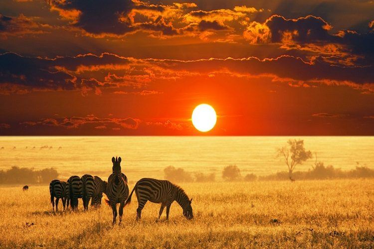 cheap flights to south africa safari-sunset