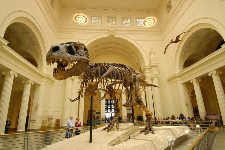 FREE DAYS Field-Museum-Chicago-T-Rex