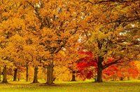 free admission thanksgiving morton arboreteum 2018 -750 x 500