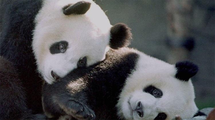 free zoo cams
